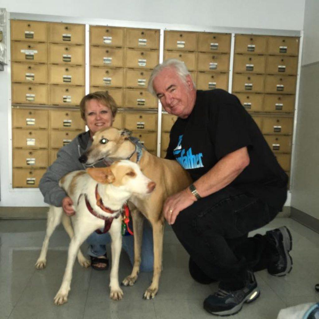 perros de malaga adoptados en finlandia