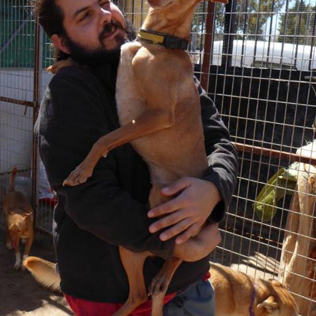 colaborar con protectora de animales