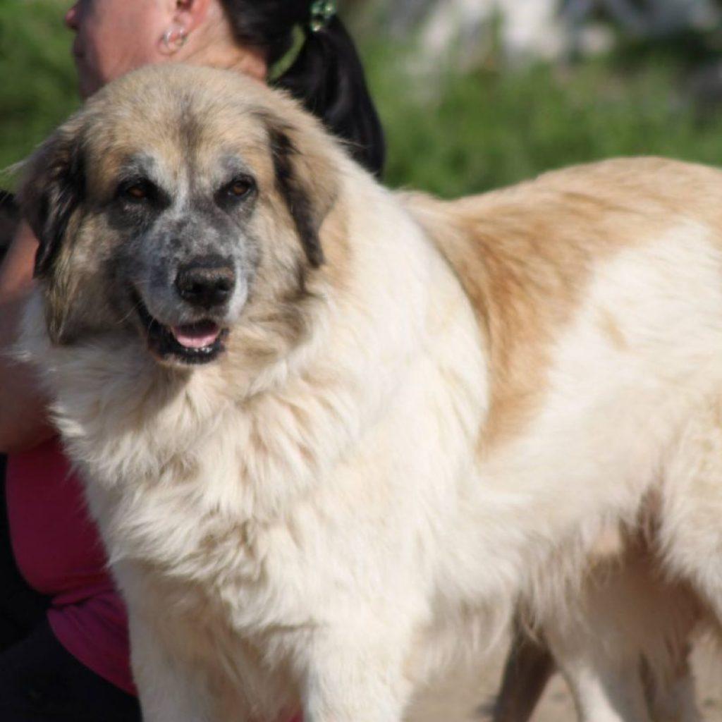 Billy perro para adoptar malaga