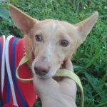 Adam perro para adoptar en protectora de animales en malaga