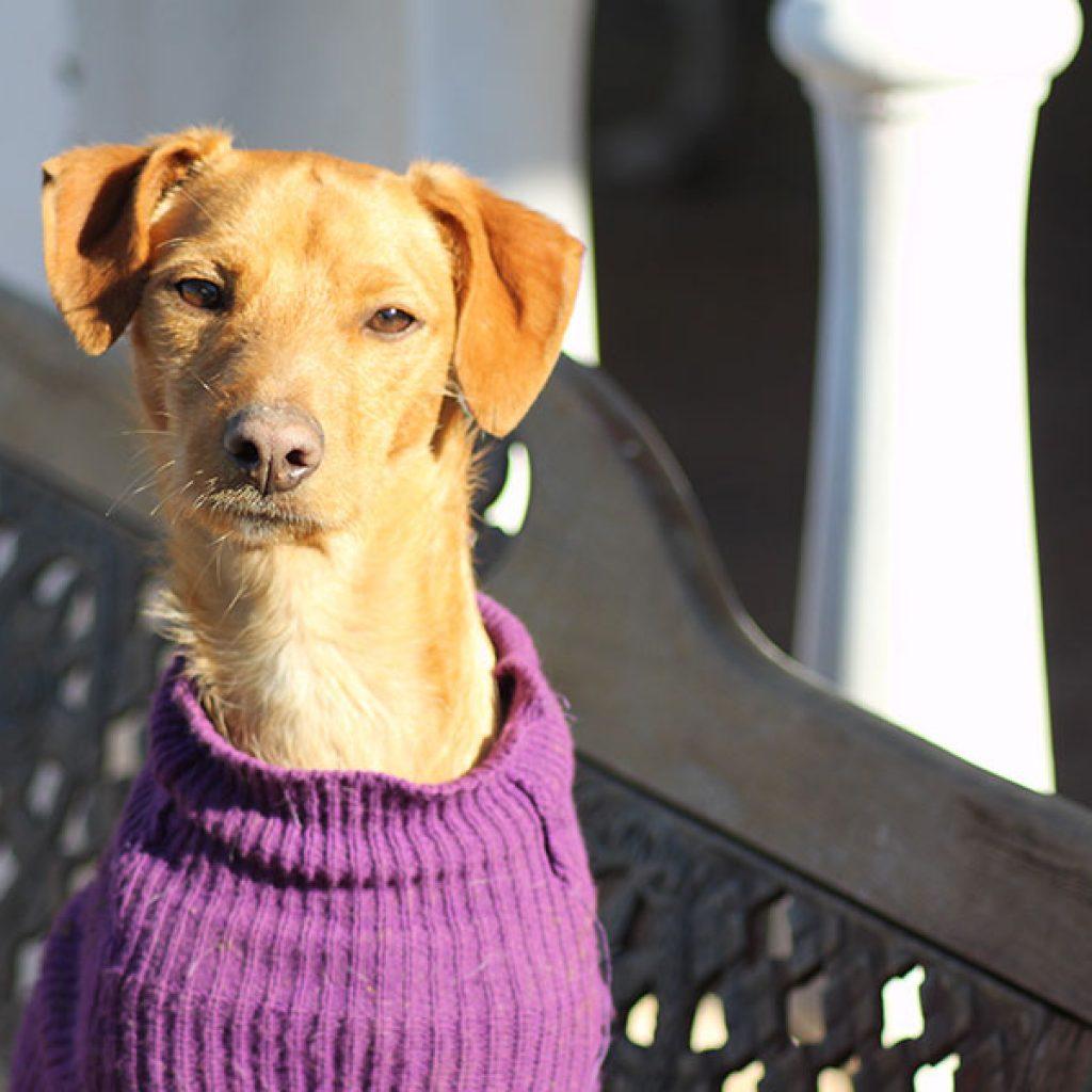 babu es un perro para adoptar en malaga