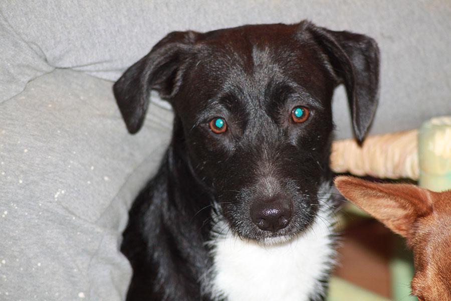 rufo adopcion de perros en malaga