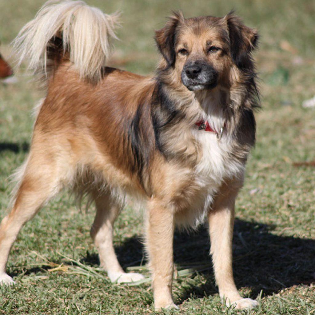 tristan perro pequeño en adopcion en malaga