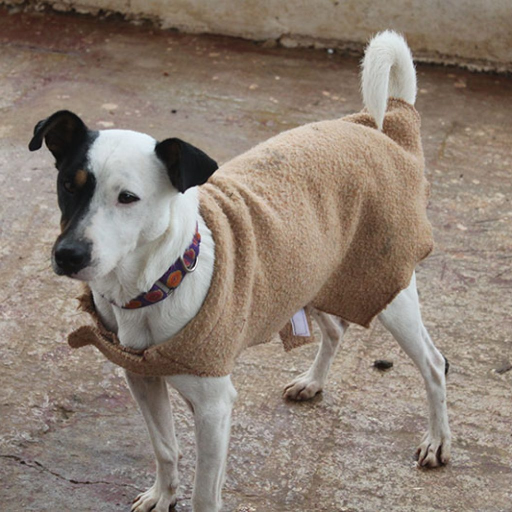nolan perro en adopcion en malaga