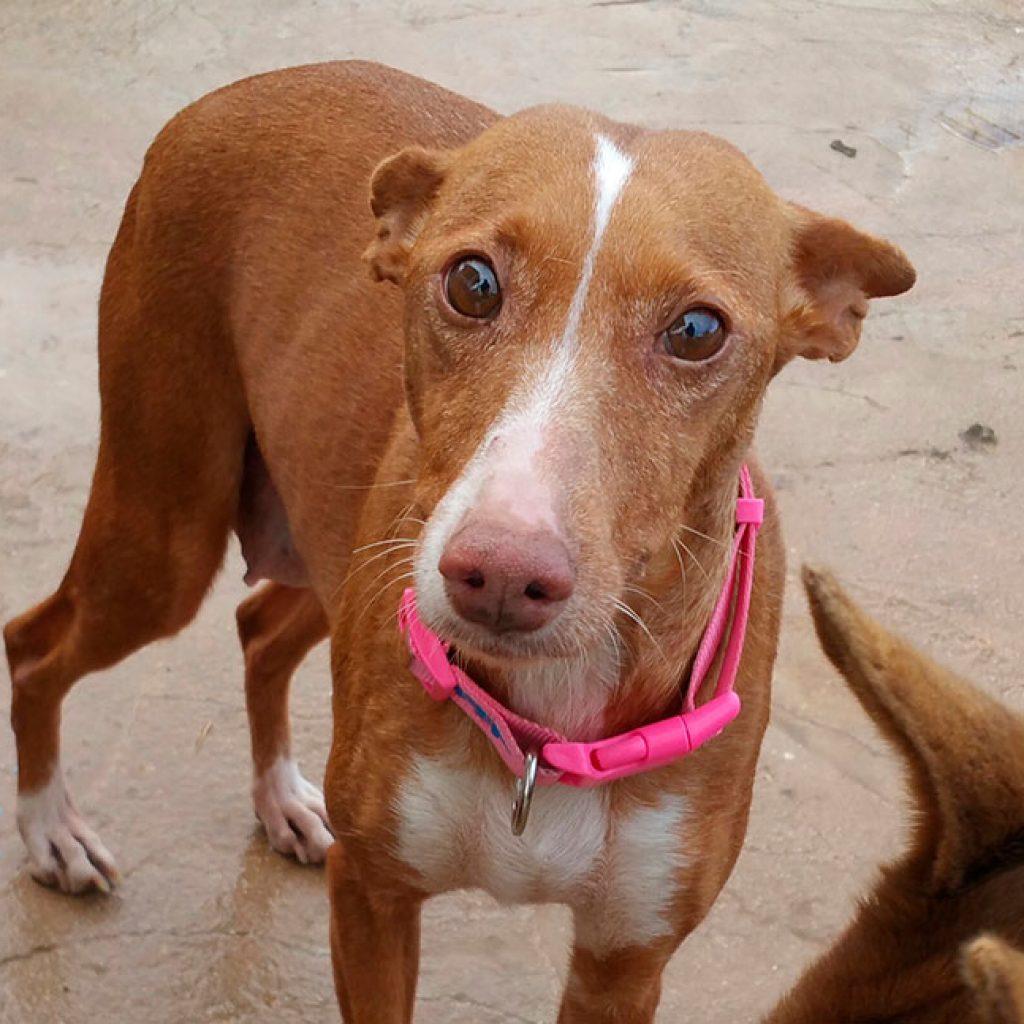 princesa perra en adopcion en malaga
