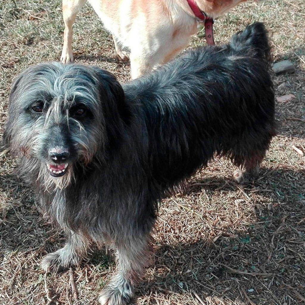 momo perro en adopcion en malaga