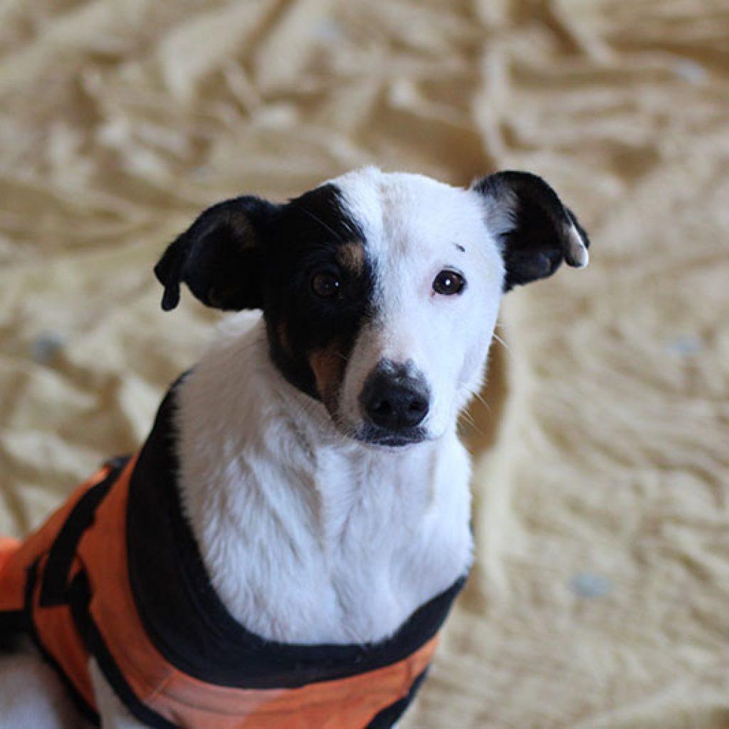 sofia perra en adopcion en malaga