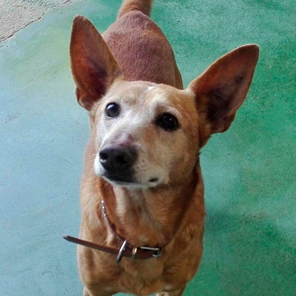 mayo-perro-en-adopcion-en-malaga