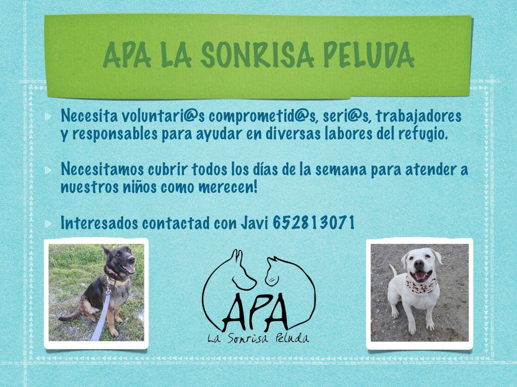 Buscamos Voluntarias/os