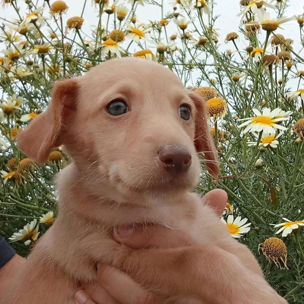 sol-cachorrito-para-adoptar-en-malaga