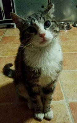 tito gato en adopcion