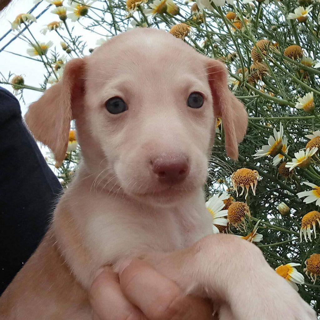 wally-bebe-cachorro-para-adoptar