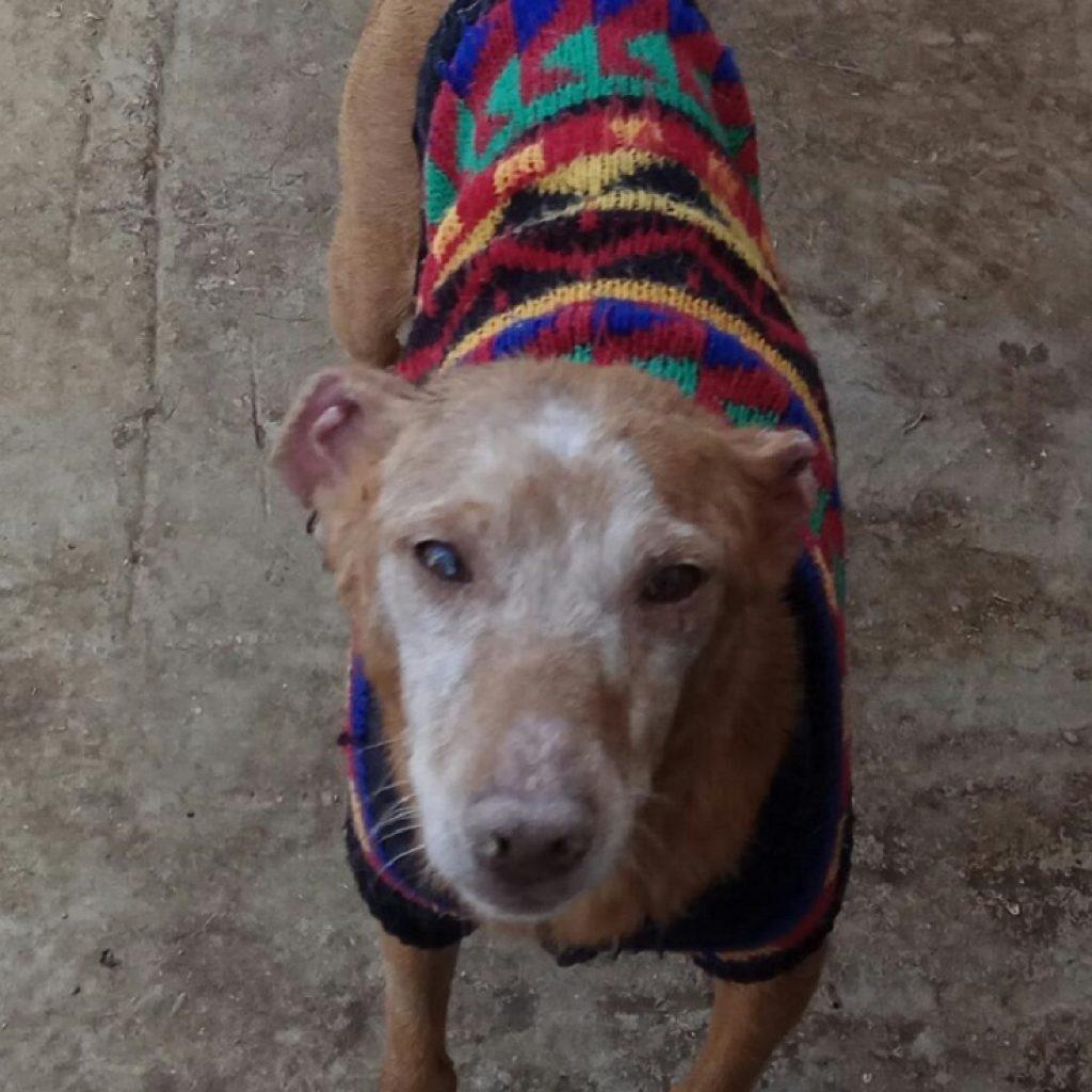 blas es un perro en adopcion en malaga