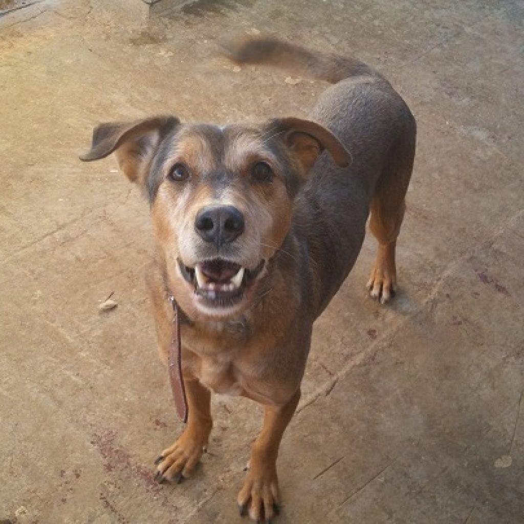 darro perro en adopcion en malaga