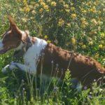 flaky perro para adoptar urgente la sonrisa peluda