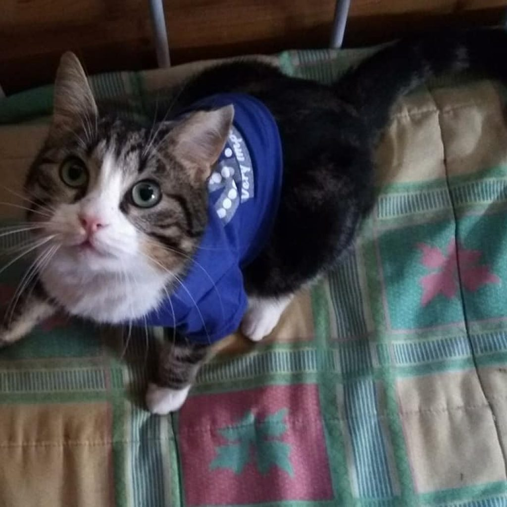 gatos y gatitos en adopcion en malaga