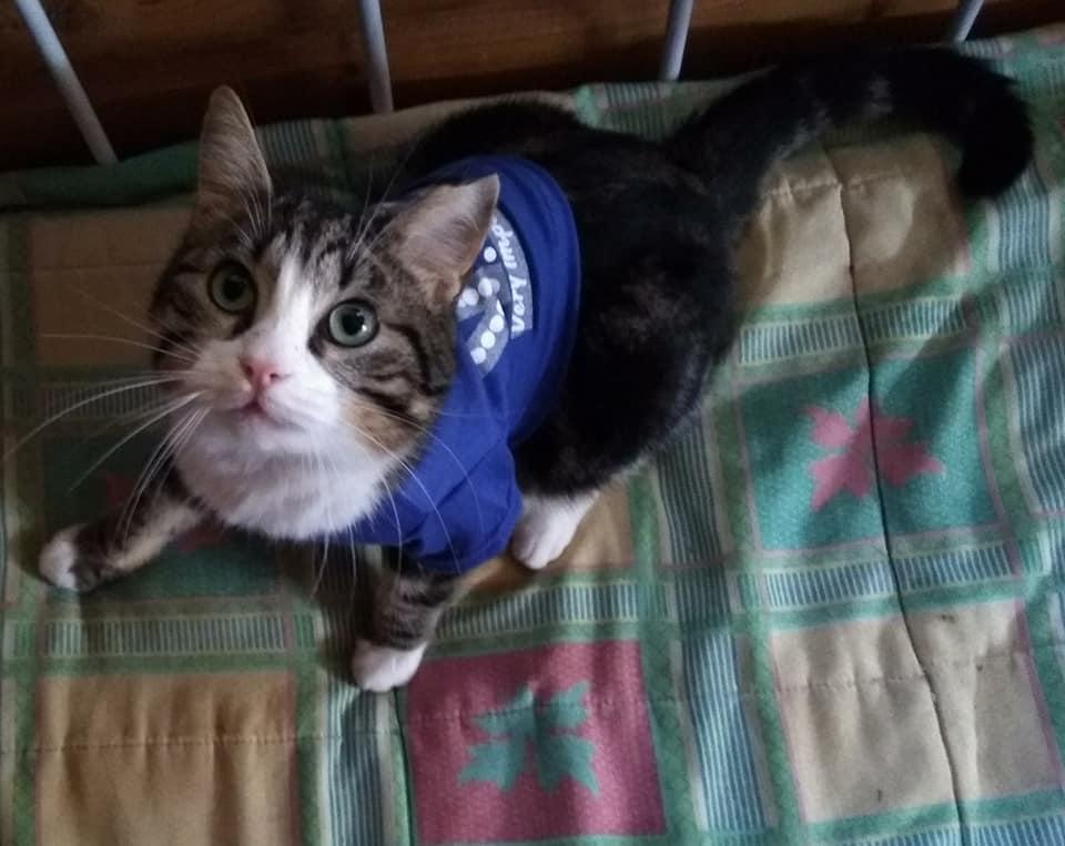 Gatos en Adopción en Málaga