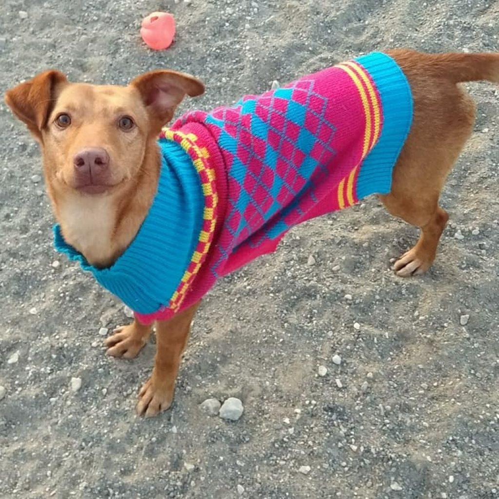 waggy perro para adoptar en malaga la sonrisa peluda