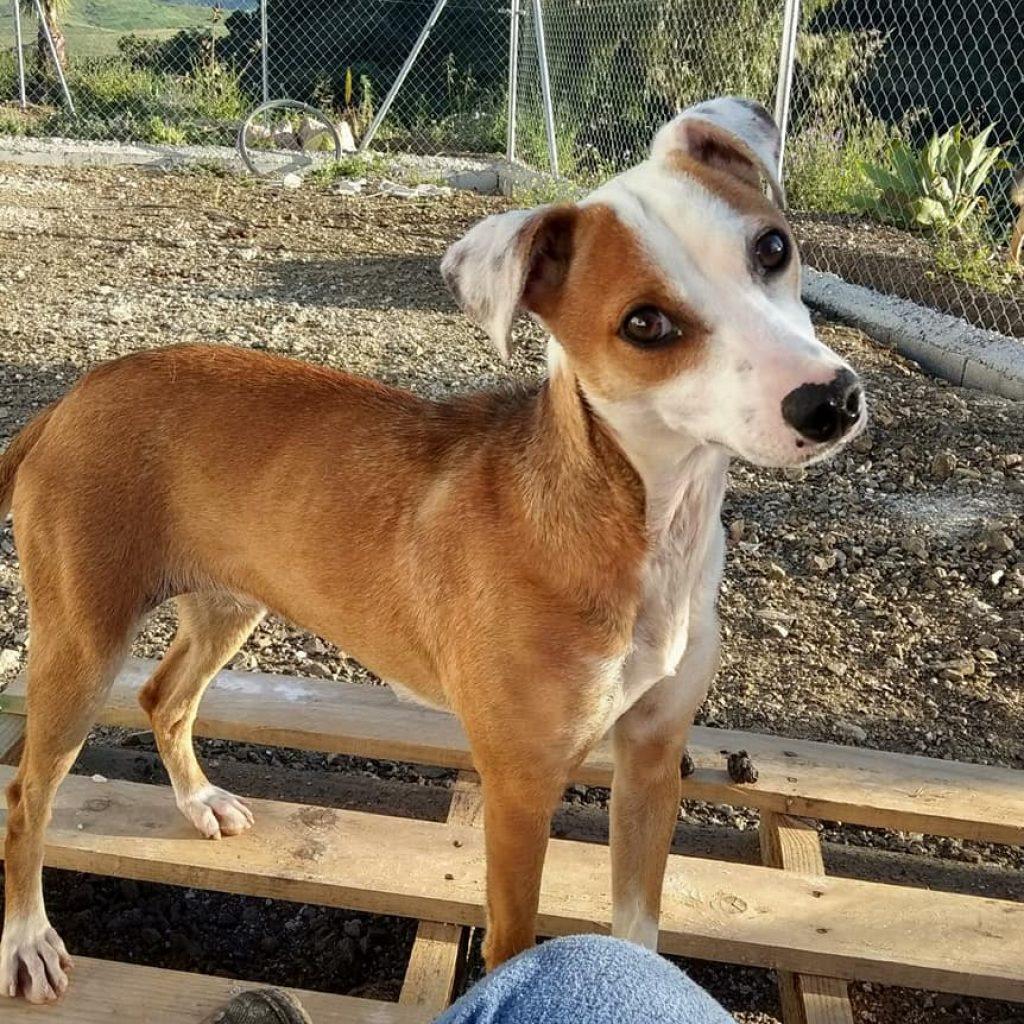 abril cachorro en adopcion en malaga