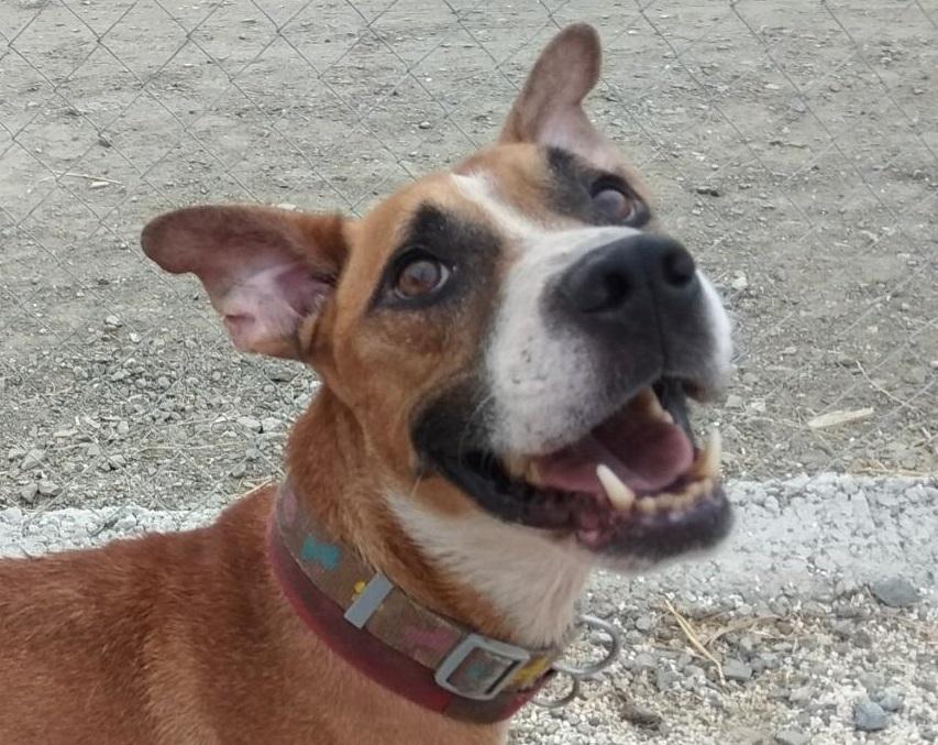 Jonny es un perro en adopcion en la protectora la sonrisa peluda de malaga