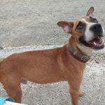 Jonny es un perro en adopcion en malaga