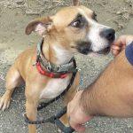 Jonny perro en adopcion en la sonrisa peluda