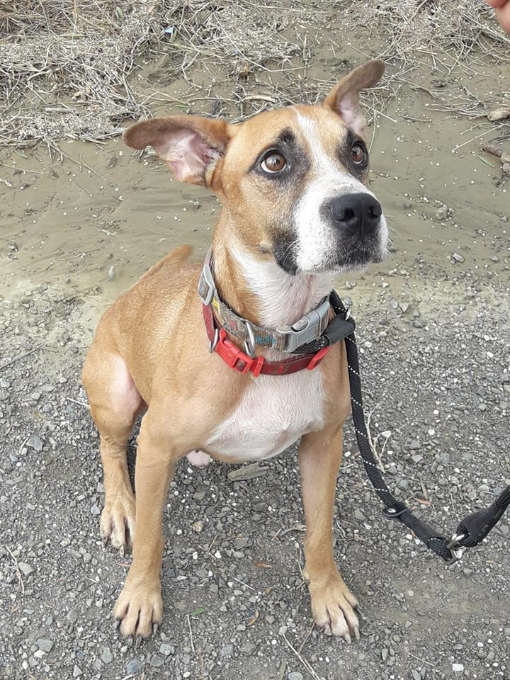 Jonny perro en adopcion