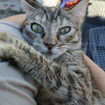 gretel es un gato en adopcion en malaga