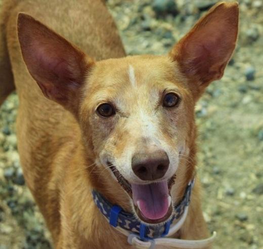 adam perro esperando adopcion en protectora miniatura