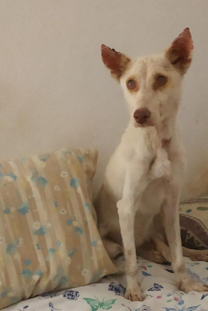 alma perra rescatada para adoptar en malaga