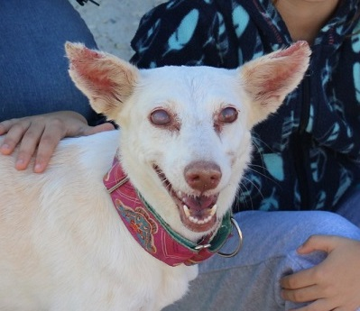 alma perra en adopcion en malaga
