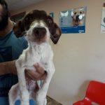 amador cachorro en adopcion en malaga