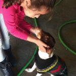 amador cachorro rescatado y que se puede adoptar