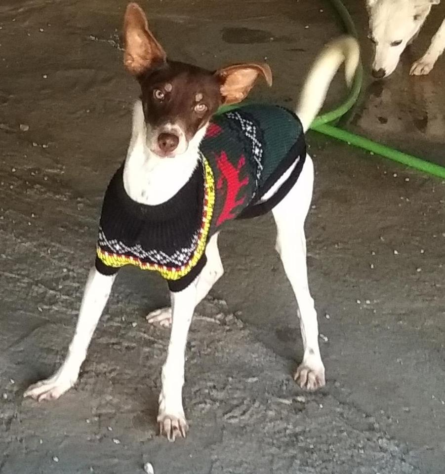 amador es un cachorro en adopcion