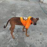 cachorrita en adopcion