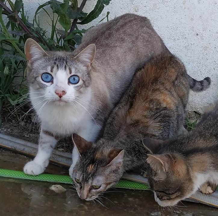 casper gato para adoptar en malaga