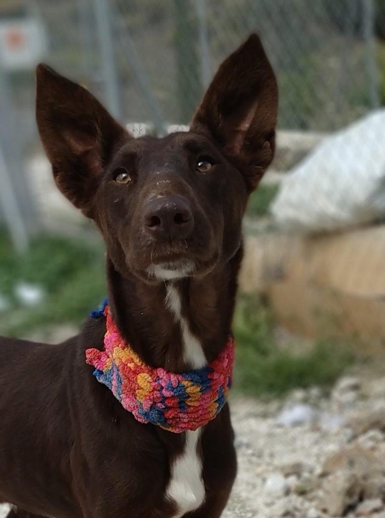 choco perro para adoptar en malaga