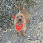 fabio es un perro de tamaño pequeño para adoptar