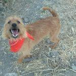 fabio perrro pequeño para adoptar en malaga