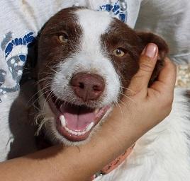 figo perro en adopcion