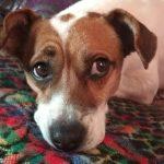 gin perra mestiza en adopcion