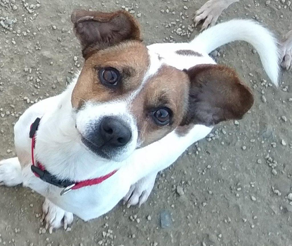 gin perra para adoptar en la sonrisa peluda