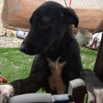 hope es una perra en adopcion