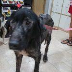 hope perra en adopcion en malaga