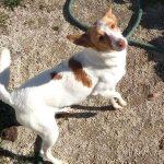 mati perro en adopcion en la sonrisa peluda