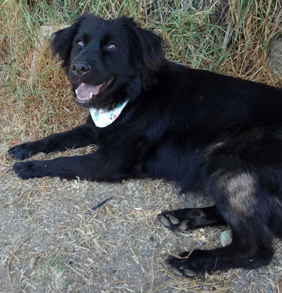milly perra en adopcion