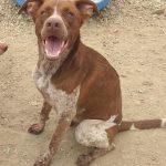 rayo perro para adoptar en protectora malaga