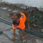 summer adoptar perrita en malaga