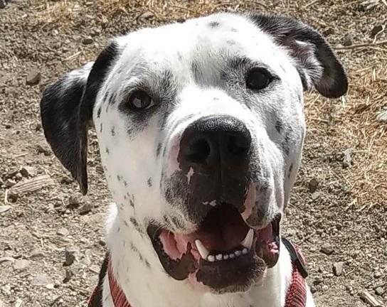 thor perro en adopcion