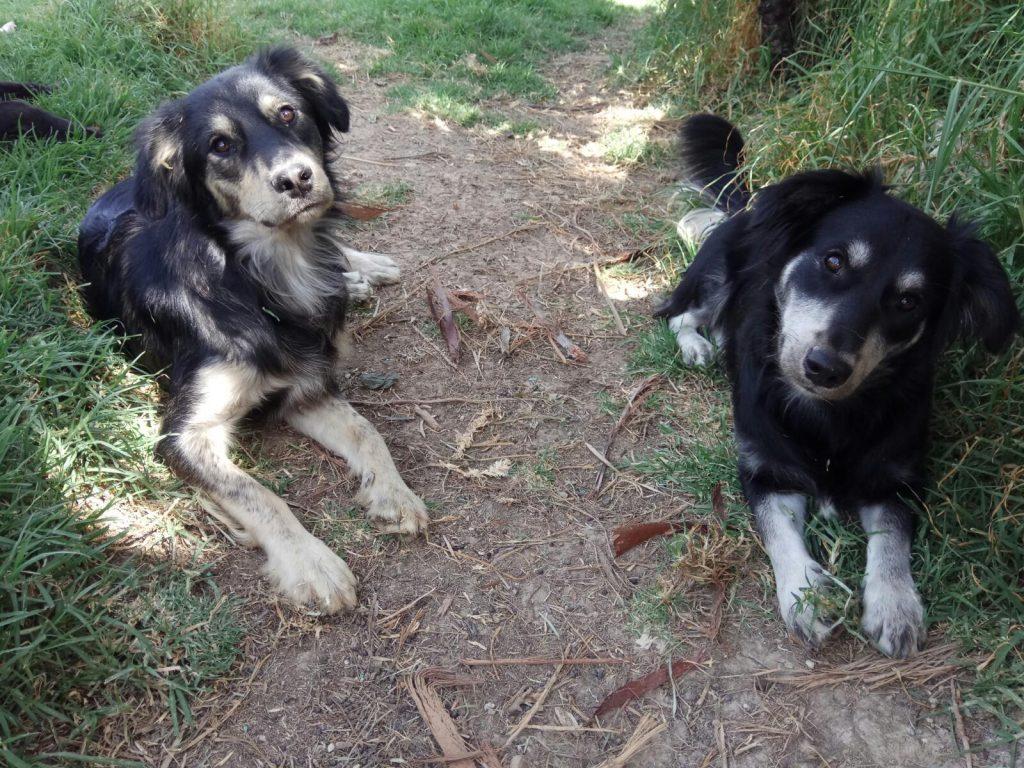 tom y jerry dos perros para adoptar en malaga